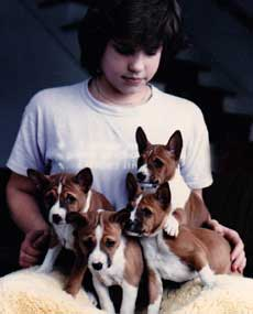 Facts about the basenji